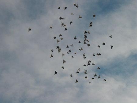 2003_7_birds4.jpg