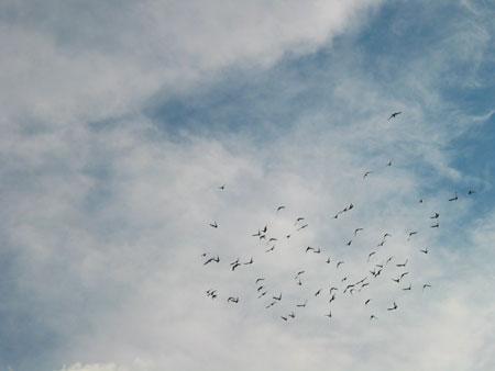 2003_7_birds5.jpg