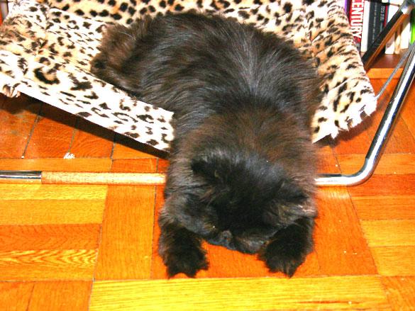 thompson in repose