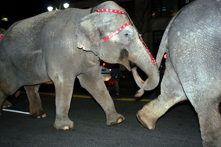 The Running of the Elephants