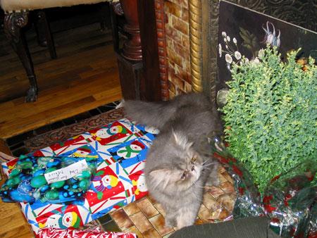 mingus, dobkin cat #2