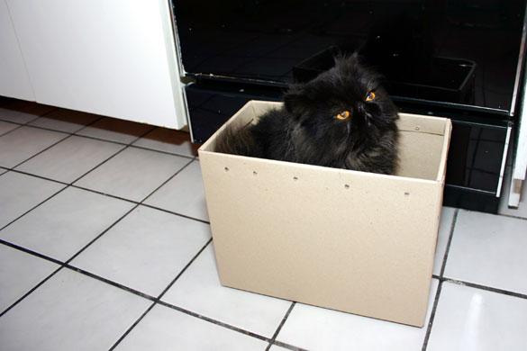 16-35mm, 50mm, 85mm Cat