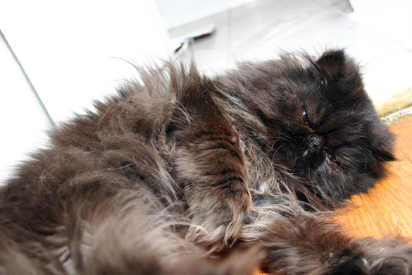 Cat, December