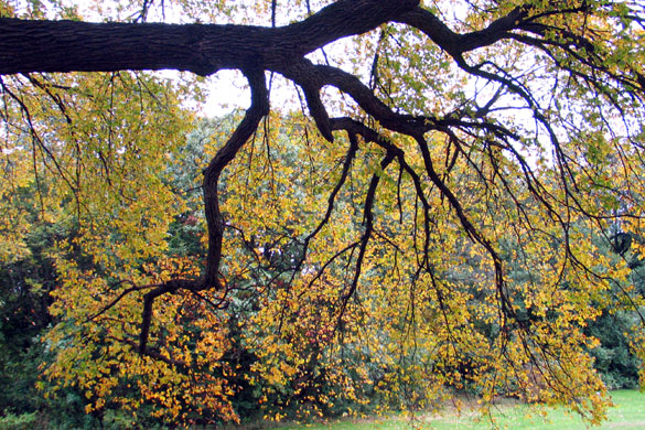 Prospect Park Autumn