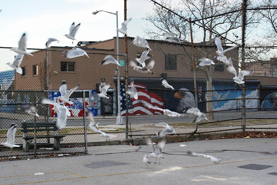 Birds in Foreground, Birds in Background