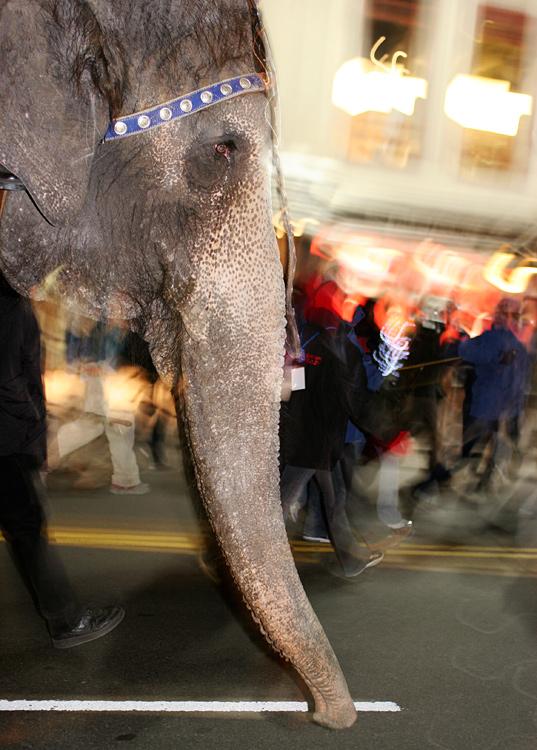 An Elephant on 34th Street at 1:30am