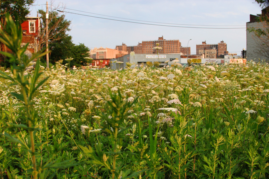 A Field in East Williamsburg